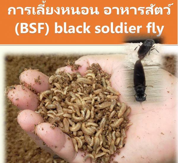 การเลี้ยงหนอน BSF อาหารสัตว์