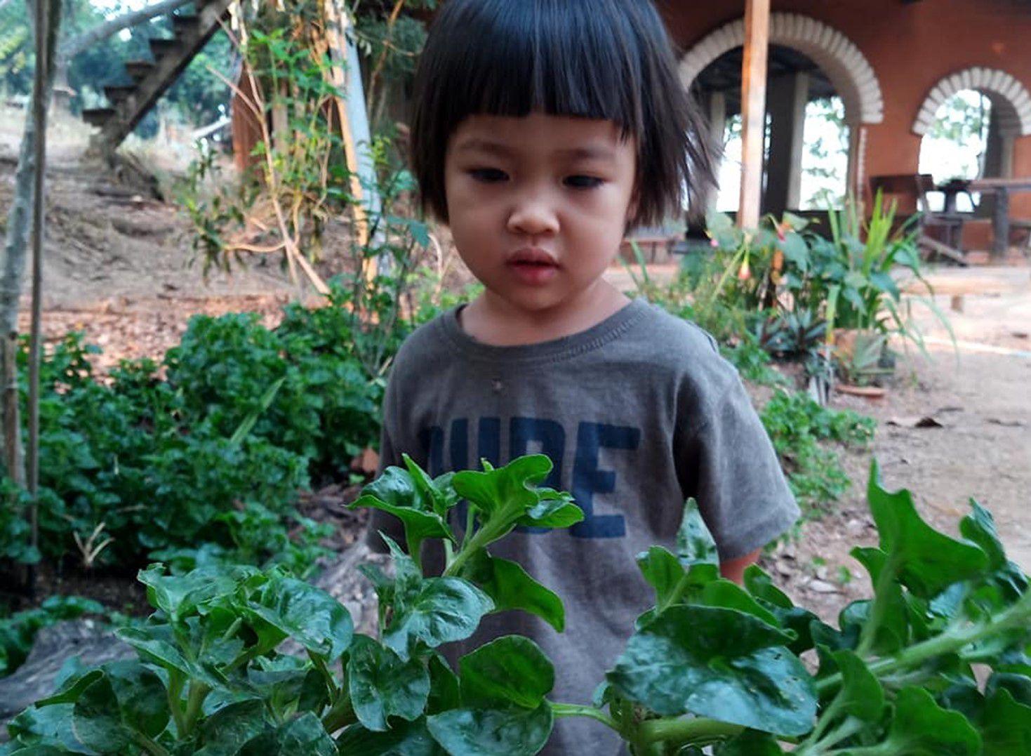 สอนลูกให้กินผัก